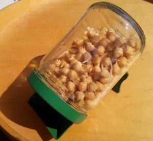 graines germées maison
