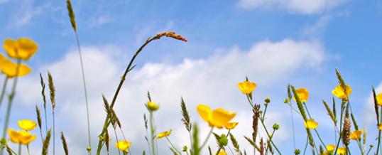 La cure de détox du printemps