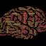 Les meilleurs compléments pour le cerveau