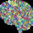 Les 7 meilleurs nootropiques synthétiques pour booster votre cerveau